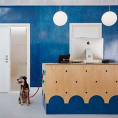 London animal hospital respects the age-old rivalry between cats and dogs Clinic Interior Design, Interior Design Programs, Clinic Design, Commercial Interior Design, Pet Shop, Hospital Architecture, Office Dog, Dog Hotel, Dog Salon