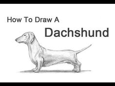 How to Draw a Dog (Dachshund) - YouTube
