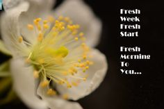Take a deep breath and start on this brand new week Take A Deep Breath, New Week, Fresh Start, New Start