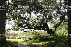 Southern Garden with Bench royalty-free stock photo Live Oak Trees, Royalty Free Stock Photos, Southern, Bench, Garden, Plants, Room, Image, Garten