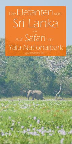 Komm mit auf eine Safari durch den Yala-Nationalpark in Sri Lanka! #srilanka #elefanten #safari Sri Lanka Photography, Travel And Tourism, Where To Go, Travel Inspiration, Safari, Places To Visit, Asia, Wildlife, Ocean