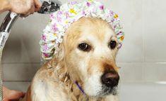 Como proteger a saúde do cão na hora do banho