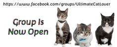 Ultimate Cat Lover Community aims to bring cat admirers together with humorous and engaging posts about the one thing we have in common. CATS. Please help grow our group, by joining and adding your cat/animal loving friends to our group. Thank you in advance if you help spread the word by pinning this to your cat boards.   https://www.facebook.com/groups/UltimateCatLover