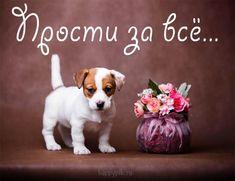 Labrador Retriever, Dogs, Animals, Labrador Retrievers, Animales, Animaux, Pet Dogs, Doggies, Labrador