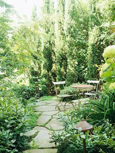 secret gardens, shrub, path, front yards, backyard
