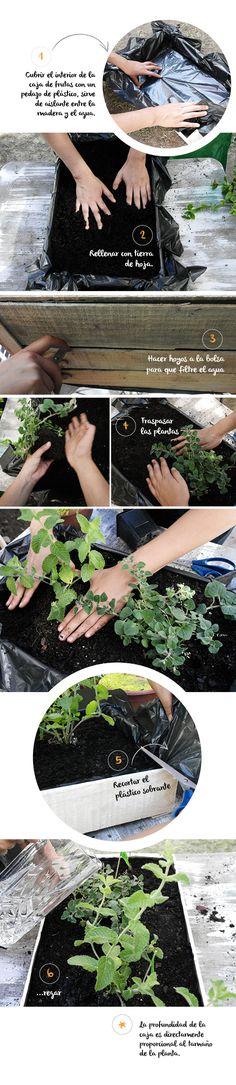 Revival como hacer un huerto en casa for Como disenar un jardin pequeno