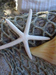 Starfish Hair ClipStarfish Sparkle Hair von sandnsurfcreations, $12,00