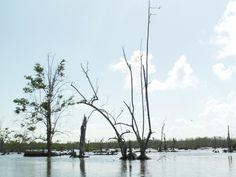#Suriname #Bigi Pan