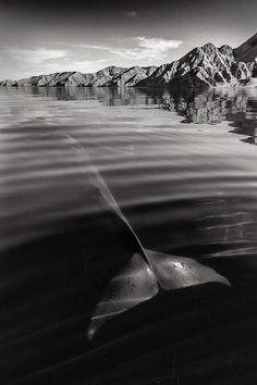Ce Britannique a passé 25 ans de sa vie à photographier ces géants des mers dans toute leur splendeur. Vous ne les avez sûrement jamais vus d'aussi près.