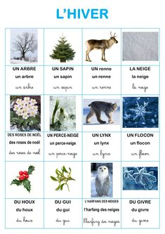 Imagier nature de l'hiver d'Elisa Swaney French Class, French Lessons, Preschool Themes, Montessori Activities, How To Speak French, Learn French, French Resources, French Immersion, French Words