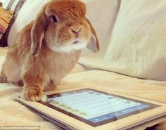 http://www.dailymail.co.uk/femail/article-2399974/Bunnymama-bunny-brothers-Eddy-Rambo-unlikely-Instagram-stars.html
