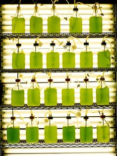 Algae-laboratory-0002-Qualitas-Health.jpg (960×1279)