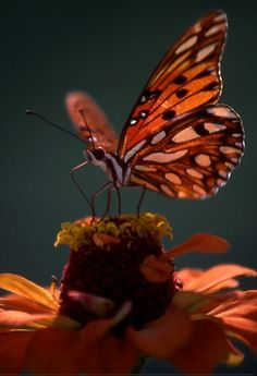 autumn -- [REPINNED by All Creatures Gift Shop]