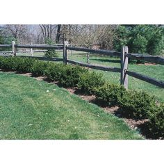 Spreading Yew Accent Shrub In Pot (With Soil) Nursery - All For Garden Front Yard Landscaping, Landscaping Ideas, Farmhouse Landscaping, Backyard Ideas, Mulch Landscaping, Fence Ideas, Backyard Patio, Patio Ideas, Yard Design