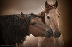 The Return to Freedom American Wild Horse Sanctuary currently provides a safe haven to more than 400 wild horses and burros. With roundups ongoing, it is vital that we provide a place where freedom, genetic & diversity and natural lifestyle are preserved.