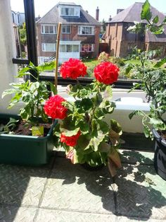 Our balcony garden