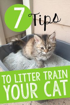 Do you have a cat that you need to train to use a litter box? Perhaps you've got a new kitten that has never used litter before, or you're transitioning an outdoor cat to be strictly indoors and need to teach him where he can appropriately eliminate? Or, maybe your cat has stopped using the litter box for some reason and you need to re-train him or her to use the box to prevent soiling in the house. Here are some tips!!