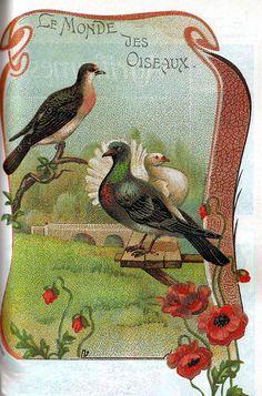 belle époque-le monde des oiseaux