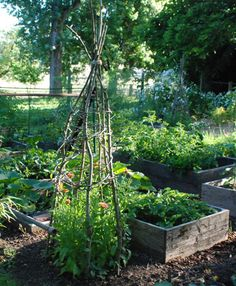 Teepee trellis with natural wood