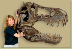 #Tyrannosaurus rex STAN Half Skull - Fossil Replica