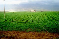 Iraq. Mountains tower over a crop field in the Kurdish North. Azad Mohamed.