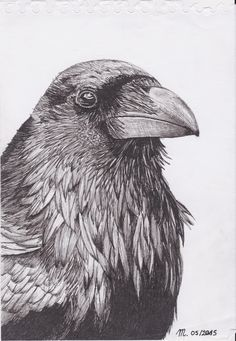 Download Crow Drawing   Art   Pinterest   Crows drawing, Crow and Crow art