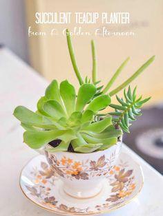 Plantas suculentas en tazas de té