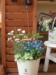 爽やか色の春の寄せ植え