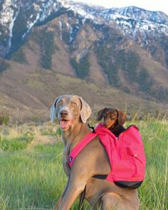 'My Little Legs just can't hike it up the Hill, I just reply on Harlow to get me up there' - Harlow and Indiana