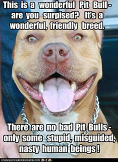 "Pit bulls can make wonderful dogs, but there are some very bad people who made some of them mean through abuse and bad up bring. They aren't born mean it's how they are raised that determines a ""good dog."" Please don't discriminate they are good at heart."