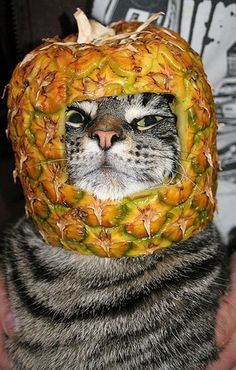 1000+ images about lol on Pinterest | Sombreros, Animals and Wtf Funny