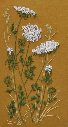Queen Anne's Lace ... ?