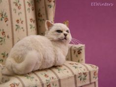 Realistic Dollhouse Miniature MootaFat Cat by EEWintersMiniatures