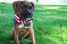 King Bowser - Bowser | VSPETS - Internet Pet Competition, Pet Photo Contest | Enter your pet at www.VSPETS.com