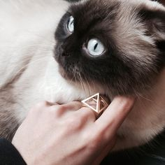 NITZ & SCHIECK | Now also approved by Bastet: the upcoming Egypt ring #nitzschieck #3dprintedjewelry #newcollection #cat