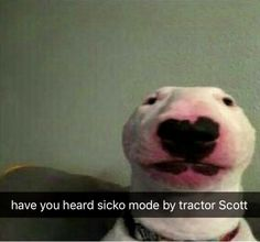 They got the front of the Funny Dog! - They got the front of the Funny Dog! Doge, Dog Memes, Funny Memes, Hilarious, Very Cute Dogs, Quality Memes, White Dogs, Meme Faces, Stupid Memes