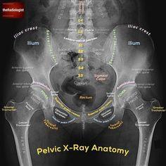 37 Best Ideas For Medical Life Medicine Radiology Schools, Radiology Student, Nursing Schools, Veterinary Radiology, Radiology Humor, Rad Tech, Muscle Anatomy, Hip Anatomy, Medical Anatomy