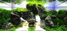 aquascape with rock arch