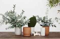 Un showroom australien, décor ethnique. Pop and Scott, un lieu de rencontre d'artisan. Pot en terre cuite, belle déco de table avec eucalyptus.