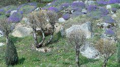 Springtime am Schluchsee