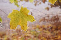 herbst swason autumn photography fall october november