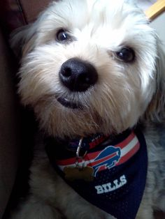 Even dogs love the Bills!