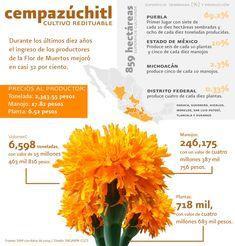 La flor de Cempazúchitl es utilizada para las ofrendas del Día de Muertos - Cempazuchitl is the Mexican name for the marigold, the flower used on the day of the dead.