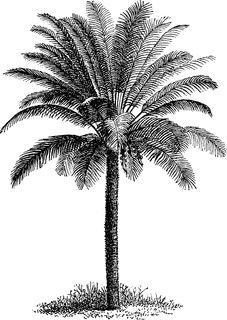 New Palm Tree Drawing Wallpaper 33 Ideas Palm Tree Sketch, Palm Tree Drawing, Palm Tree Art, Palm Tree Leaves, Tree Sketches, Palm Trees, Tree Drawings, Tree Drawing Wallpaper, Willow Tree Wedding