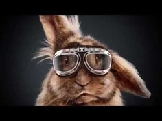 The rabbit race Media Markt Commercial 2015 ♥ HD - YouTube