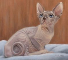 Картинки по запросу sphynx cat painting