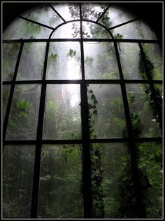 I am resting in a abandoned mansion. I see the moonlit mist in the forest. I hear the sound of wolves howling. I fall asleep watching the misty forest through a large window. Dark Green Aesthetic, Nature Aesthetic, Aesthetic Pastel, Bohemian House, Dark Bohemian, Images Esthétiques, Slytherin Aesthetic, Abandoned Places, Abandoned Library