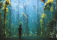 The Two Oceans Aquarium is a window into the spectacular oceans surrounding the southern African coast. Ocean Aquarium, V&a Waterfront, Knysna, Kwazulu Natal, Local Attractions, Cape Town, South Africa, Coast, African