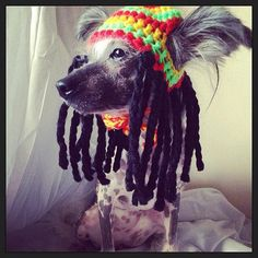 Rasta dog hat with dred locks - for small size dogs chihuahua / yorkie great photo prop