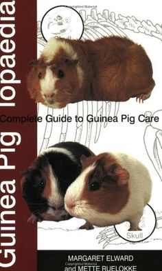 Guinea Piglopaedia: A Complete Guide to Guinea Pigs by Margaret Elward http://www.amazon.co.uk/dp/1860542514/ref=cm_sw_r_pi_dp_4lh-vb1CB0TPS